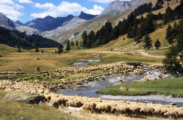 les-paysages-du-pastoralisme