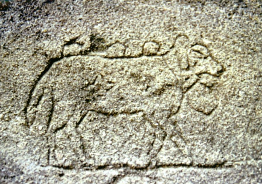 sur-les-traces-des-bergers